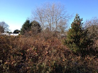 Picture of Point Roberts Parcel Number 405311-222544