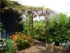 GardensWysteria