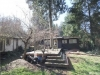 back yard2