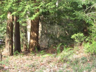 Picture of Point Roberts Parcel Number 415334-323063