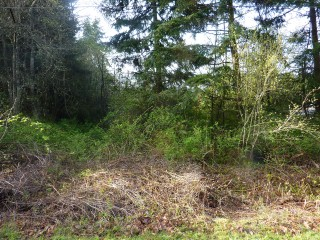 Picture of Point Roberts Parcel Number 405301-027081