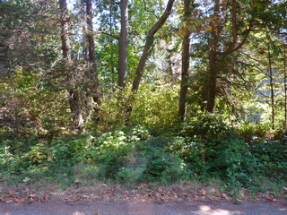 Picture of Point Roberts Parcel Number 405312-124361